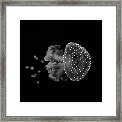 Jellyfish Framed Print by Joana Kruse