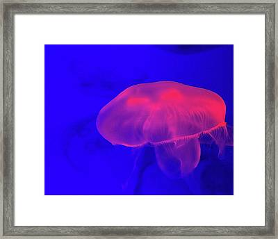 Jellyfish Framed Print by Martin Newman