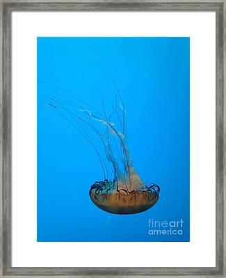 Jellyfish Art Framed Print