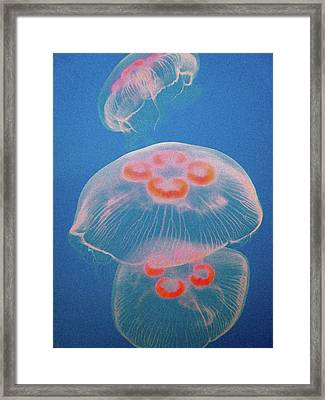 Jellyfish On Blue Framed Print