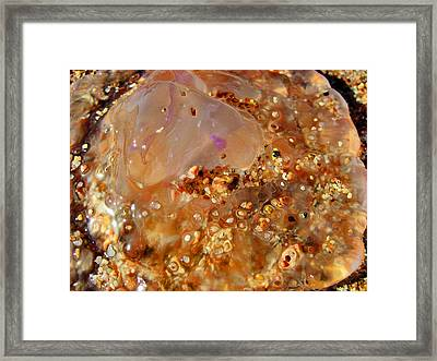 Jellyfish On The Sand. Framed Print by Andy Za