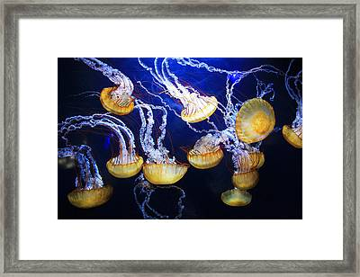 Jellyfish Framed Print by Sierra Vance