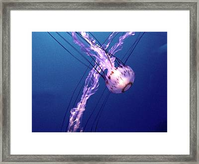 Jellyfish Vi Framed Print