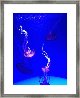 Jellyfish Wall Art 2 Framed Print