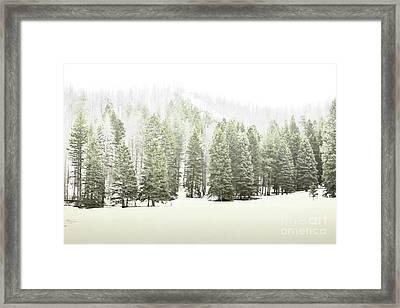 Jemez Mountains Pine Trees Snow Framed Print by Andrea Hazel Ihlefeld