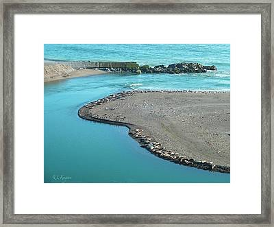 Framed Print featuring the photograph California Harbor Seals by K L Kingston