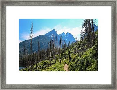Jenny Lake Trail Framed Print