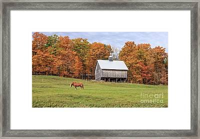 Jericho Hill Vermont Horse Barn Fall Foliage Framed Print by Edward Fielding