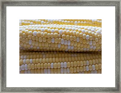 Jersey Corn On The Cob Framed Print