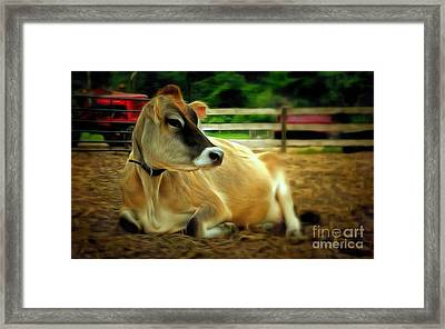 Jersey Cow - Chillaxin' On The Farm Framed Print