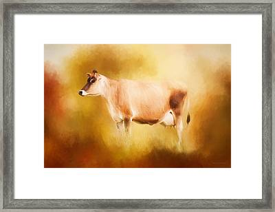 Jersey Cow In Field Framed Print by Michelle Wrighton