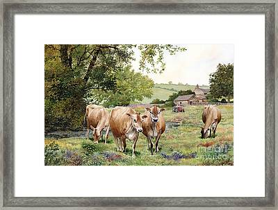 Jersey Cows Framed Print by Anthony Forster