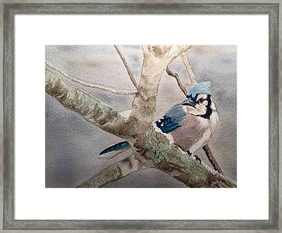Cold Winter's Jay Framed Print