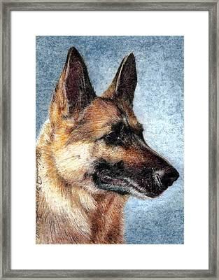Jersey The German Shepherd Framed Print by Melissa J Szymanski
