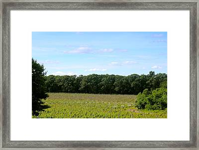 Jersey Vineyard Framed Print by Brian Manfra