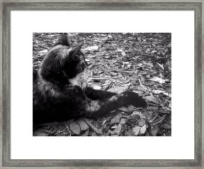 Jesk Framed Print by JAMART Photography