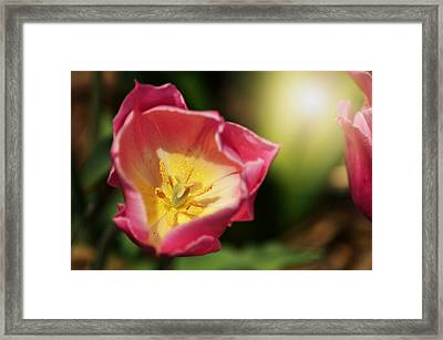 Framed Print featuring the mixed media Jessica by Trish Tritz