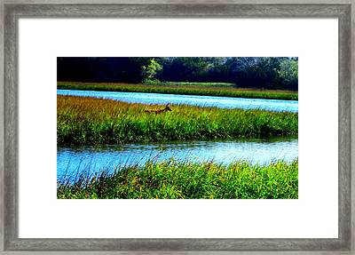 Jetty Mayport Buck #3 Framed Print by Deb Campbell