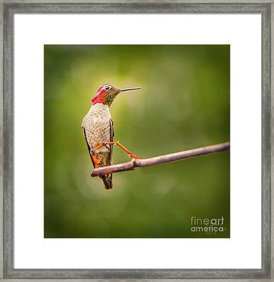Jewel In The Light Framed Print by David Millenheft