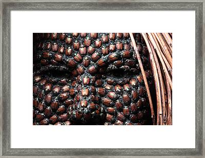 Jeweled Framed Print