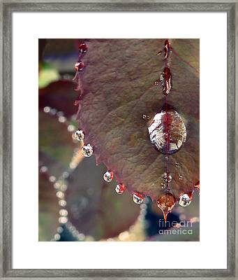 Jeweled Leaves Framed Print by Patricia Strand