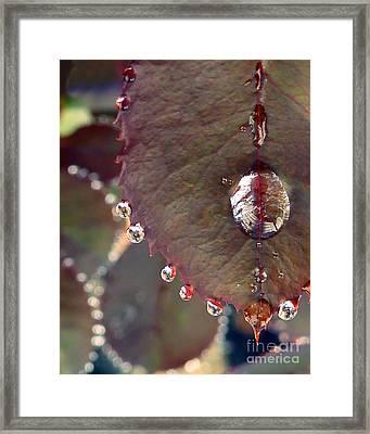Jeweled Leaves Framed Print