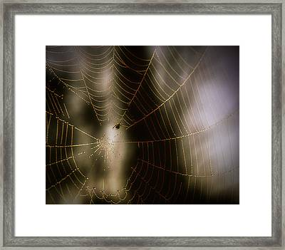 Jeweled Weaver Framed Print