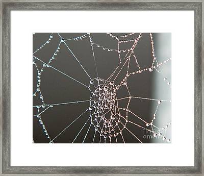 Jeweled Web Framed Print by Lloyd Alexander