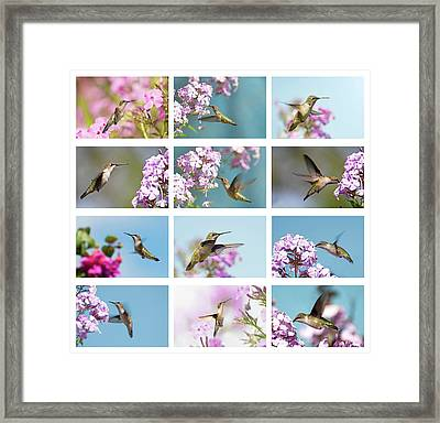 Jewels In The Garden Framed Print by Kelly Nelson