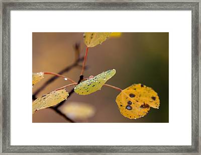 Jewels Of Autumn Framed Print by Jim Garrison