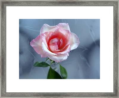 Jfk Rose Framed Print