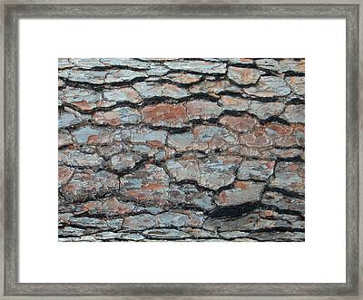 Jigsaw - Pine Tree Bark Framed Print