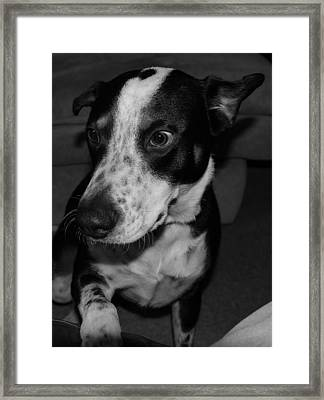 Jimmy Framed Print by Rob Hans