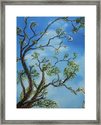 Jim's Tree Framed Print