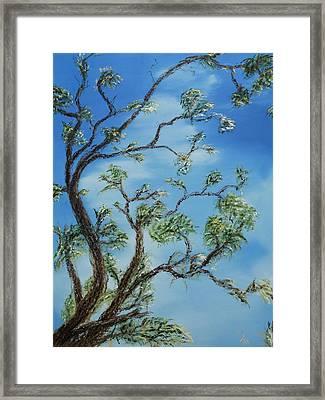 Jim's Tree Framed Print