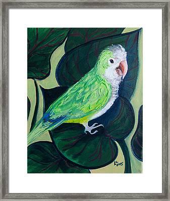 Jingles The Parrot Framed Print