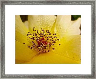 Jitterbug Framed Print by Gwyn Newcombe