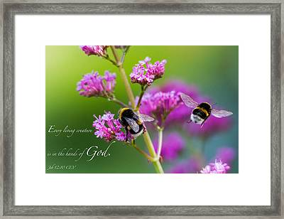 Job 12 10 Framed Print