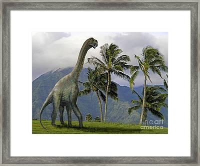 Jobaria In Meadow Framed Print by Frank Wilson