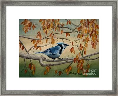 Joe's Jay Framed Print