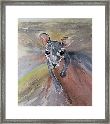 Joey In Mums Pouch Framed Print