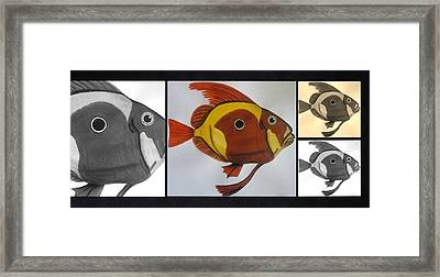 John Dory Collage Framed Print