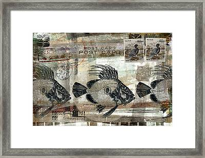 John Dory Fish Postcard Framed Print by Carol Leigh