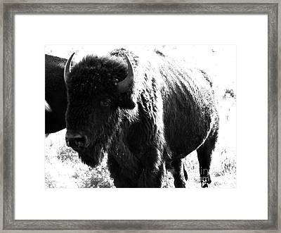 Join The Party Framed Print by Amanda Barcon