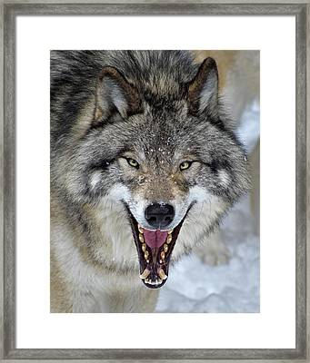 Framed Print featuring the photograph Joker by Tony Beck