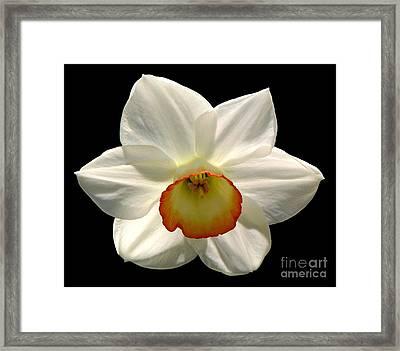 Jonquil 1 Framed Print by Rose Santuci-Sofranko