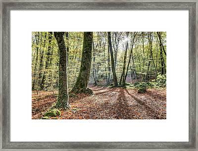 Jordan Beech Wood, Catalonia Framed Print by Marc Garrido