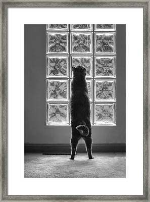 Joseph At The Window Framed Print