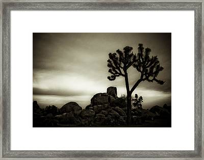 Framed Print featuring the photograph Joshua Morning by Tom Vaughan