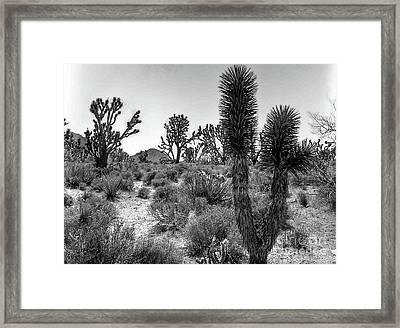 Joshua Tree 2 Framed Print
